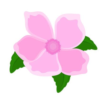 Pink Flower Petals Design