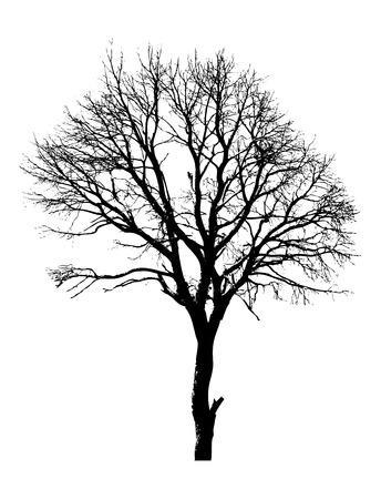 arbre mort: Morte forme d'arbre Illustration