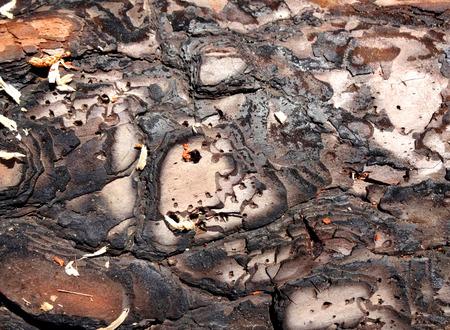 burnt: Burnt Surface Texture Stock Photo