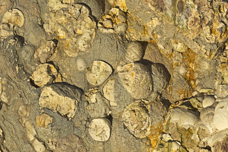 knobby: Knobby Rock Surface Texture