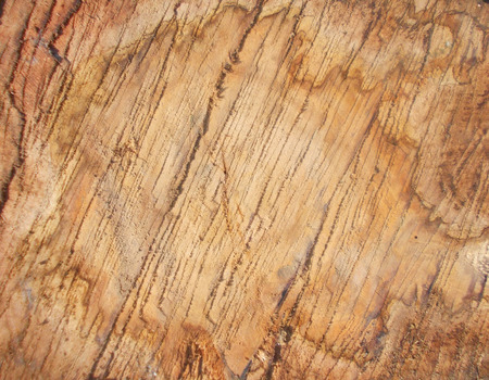 scruffy: Scruffy Grunge Wood Texture