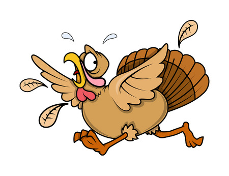 Scared Turkey Bird Running