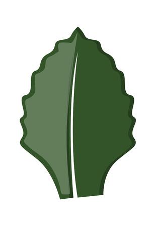 leaf shape: Dark Leaf Shape
