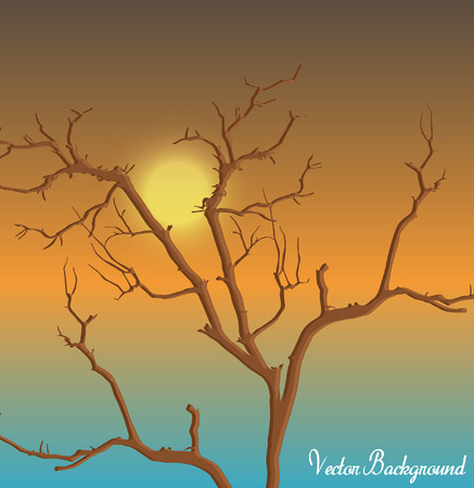 toter baum: Sunset Dead Tree