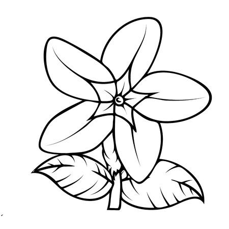 dessin fleur: Dessin Wild Flower