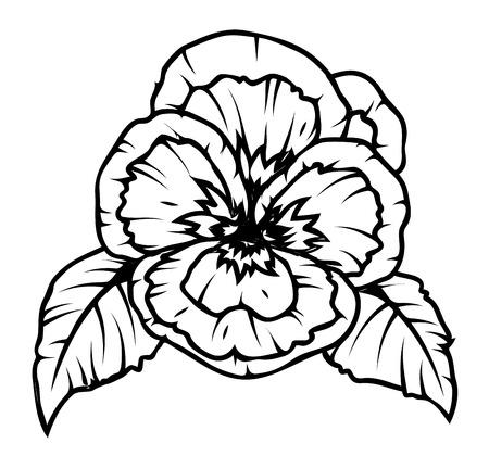 dessin fleur: Dessin de fleur de pavot