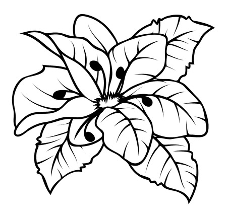 dessin fleur: Dessin Wild Flower Vector Illustration