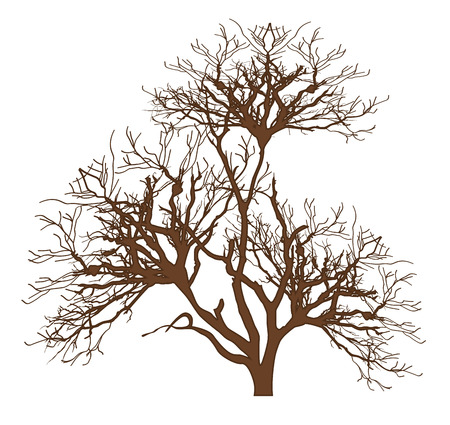 dry: Dry Tree Vector Design