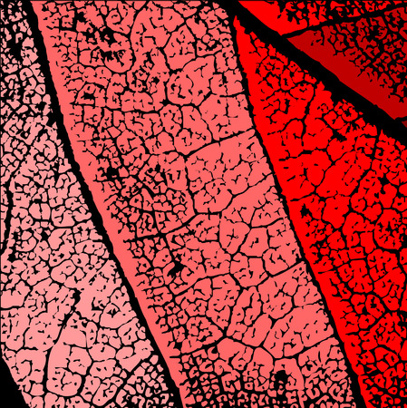 cemented: Grunge Dry Leaf Texture Vector
