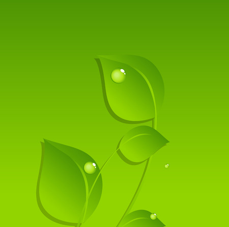 Dew Drops on Green Leaves Vector Background Vector