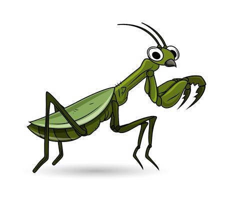 cartoon worm: Cartoon Grasshopper Cartoon Vector