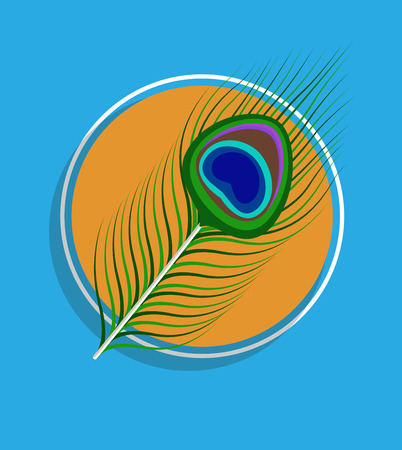 feather vector: Peacock Feather Vector Background
