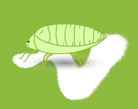 piojos: Los piojos de plantas de insectos Vectores
