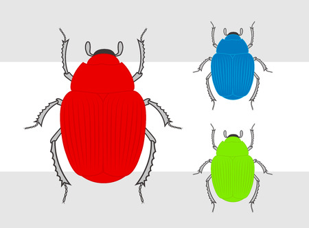 maggot: Colorful Beetle Insects