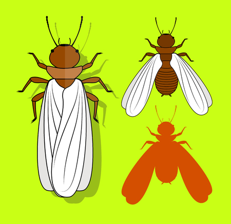 grub: Winged Termite Insects Illustration