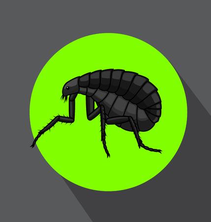 Creepy Floh Insect