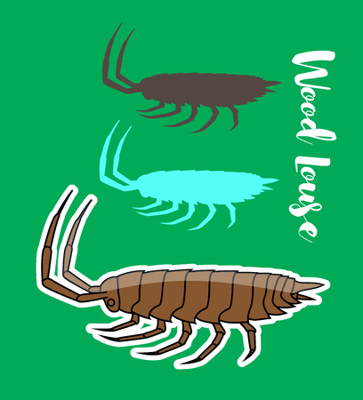 ugliness: Woodlouse Insects Vectors Illustration