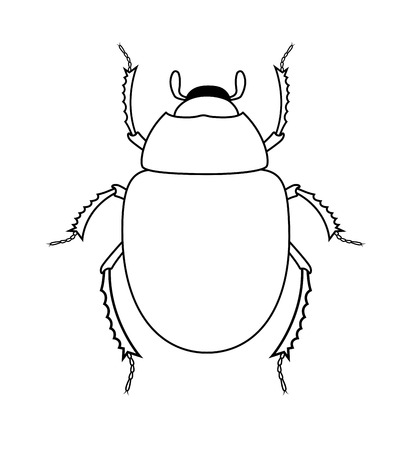 Drawing Art of Scarab Beetle Insect