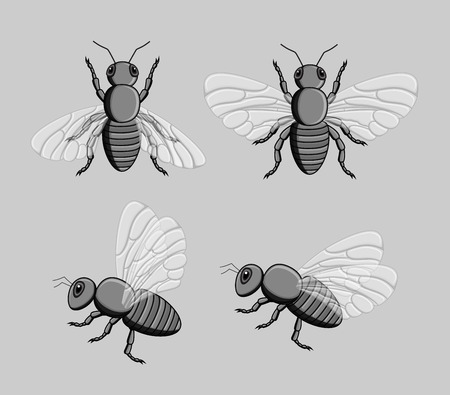 crawling creature: Wild Bees Vector