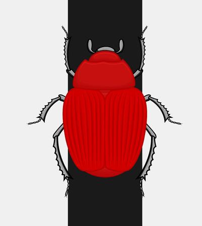 Creepy Beetle Bug