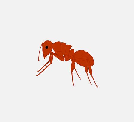 piojos: Vector hormiga roja Vectores