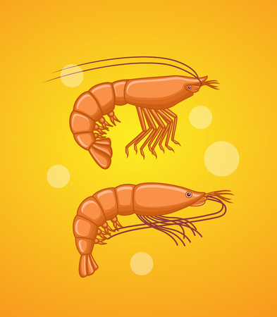 fishes: Prawn and Shrimp Fishes