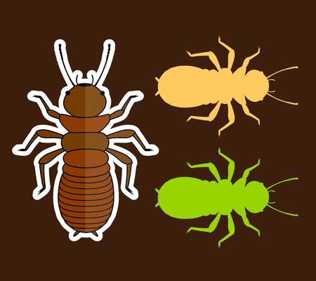 infestation: Termite Insects