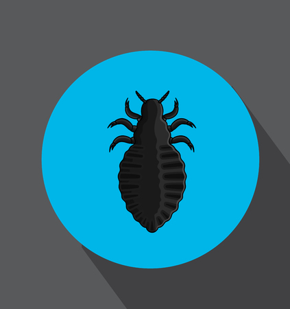 lice: Human Lice Insect