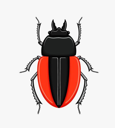 scarab: Creepy Scarab Beetle Vector