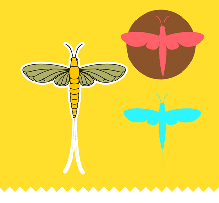 grub: Mayfly Insects Vector