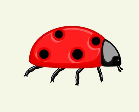 crawly: Ladybird Vector