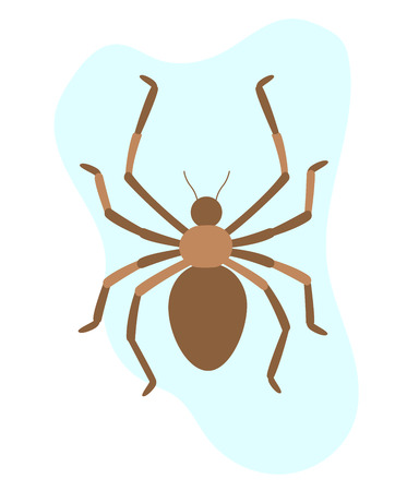 spidery: Spider Insect Illustration