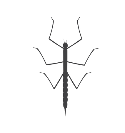 crawly: Stick Insect Silhouette