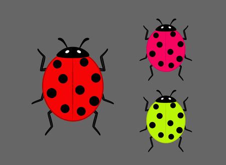 ladybug: Colorful Ladybug Insects