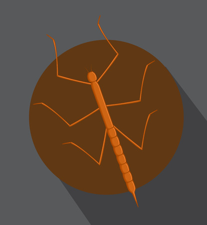 Stick Insect with Shadow