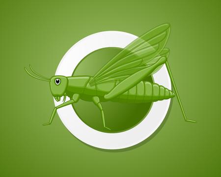chorthippus: Green Grasshopper Insect