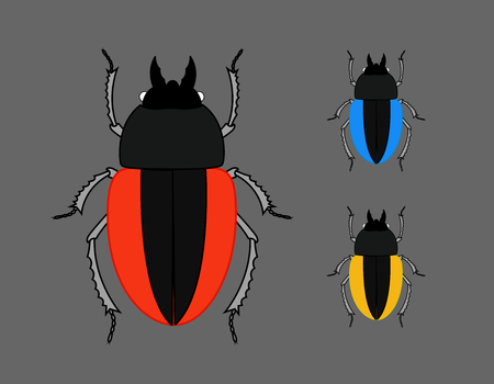 pesticides: Scarab Beetle Insects Illustration
