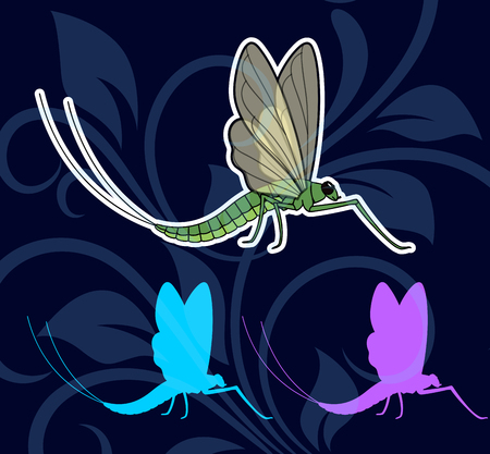 crawly: Mayfly Insects