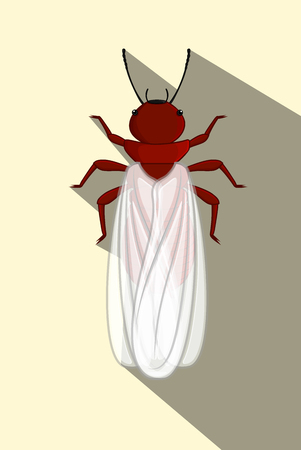 termite: Winged Termite