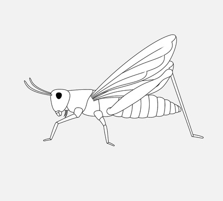 hopper: Grasshopper Drawing Illustration