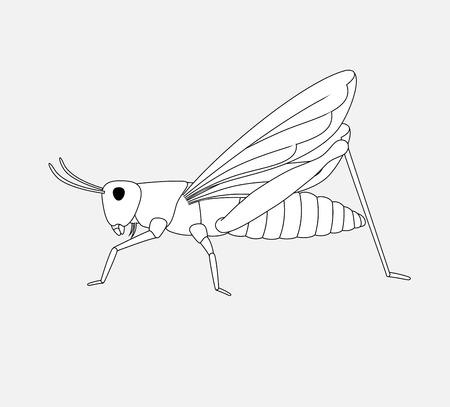 Grasshopper Drawing Illustration