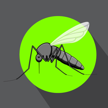 gnat: Mosquito Insect