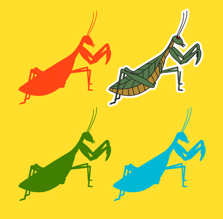 Mantid Insects Vector Shapes Illustration
