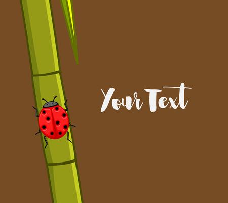 sugarcane: Ladybug on Sugarcane