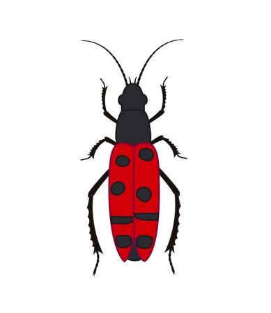 maggot: Totengraber Insect Vector Illustration