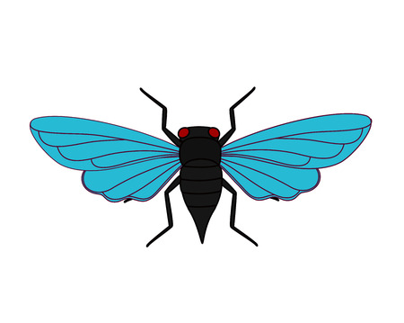 Cicada Moth