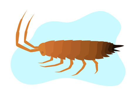 crawly: Woodlouse Insect Vector