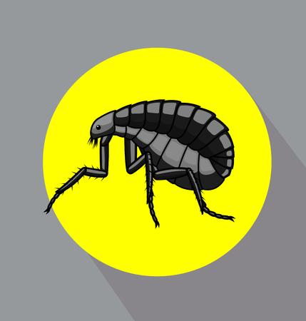 maggot: Black Tick Insect