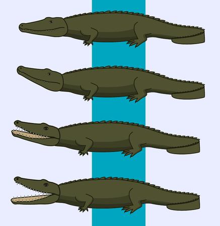alligators: Wild Alligators
