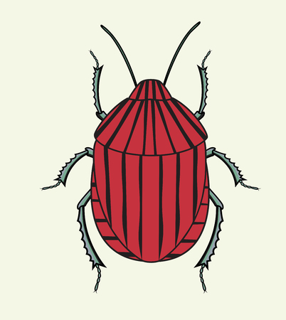 Red Striped Beetle Insect Isolated on White Illustration